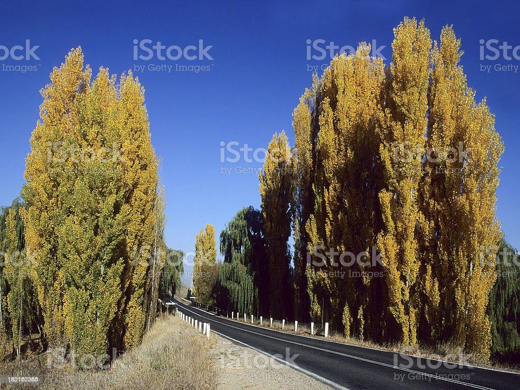 Autumn Scene in Australia stock photo