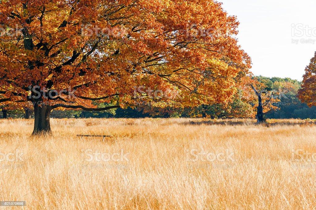 Autumn scene in Richmond Park photo libre de droits