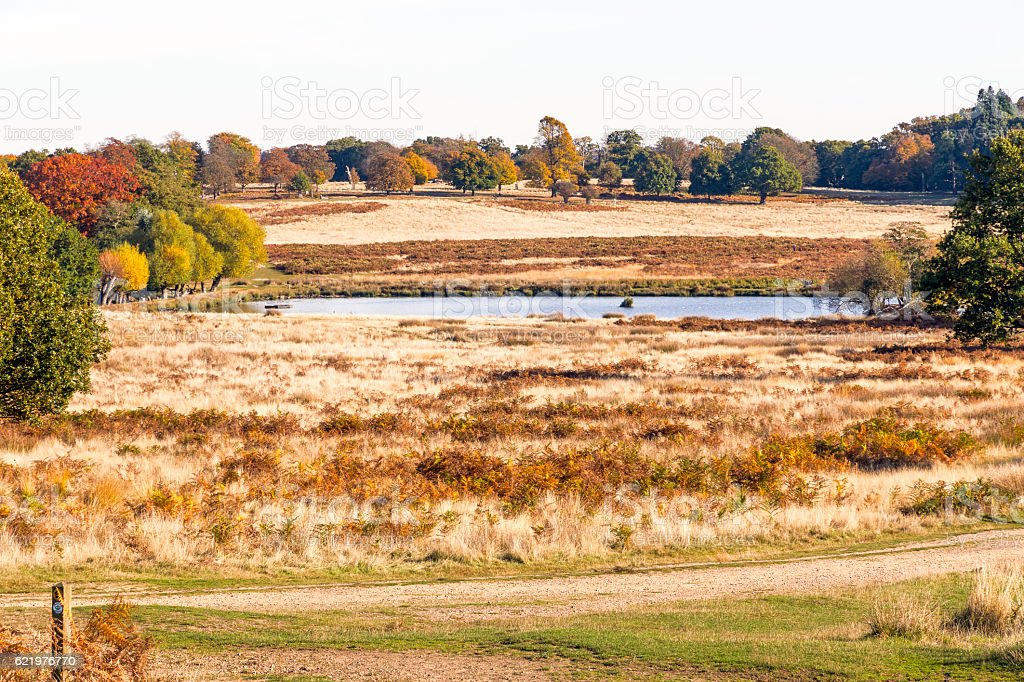 Autumn scene in Richmond Park stock photo