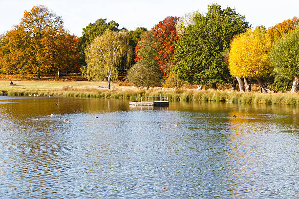 autumn scene in richmond park - richmond park stock photos and pictures