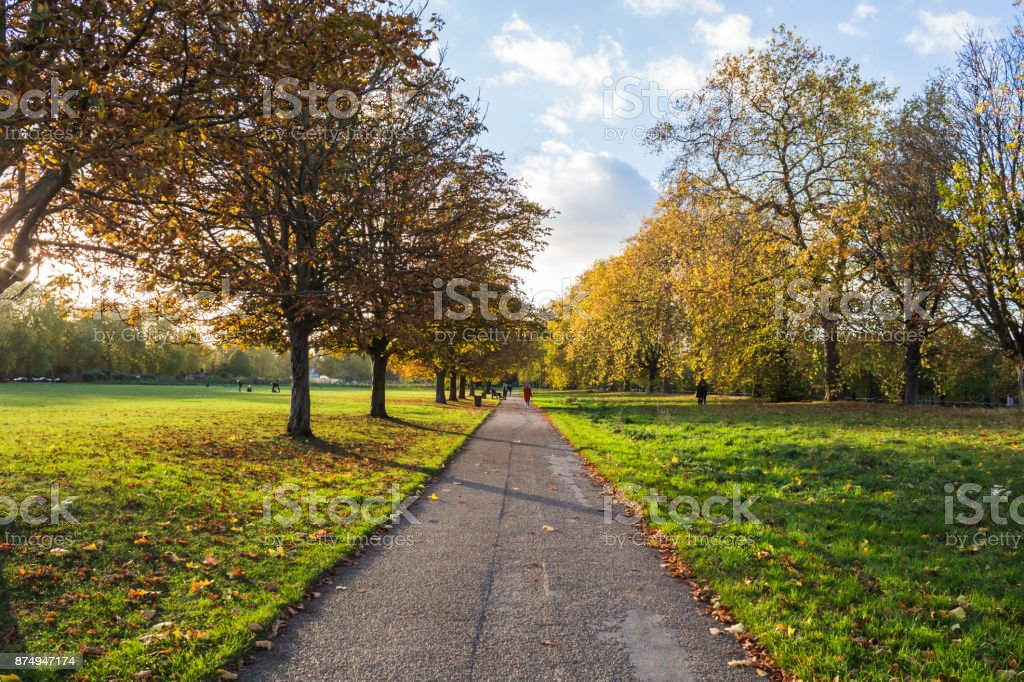 Autumn Scene in the Park