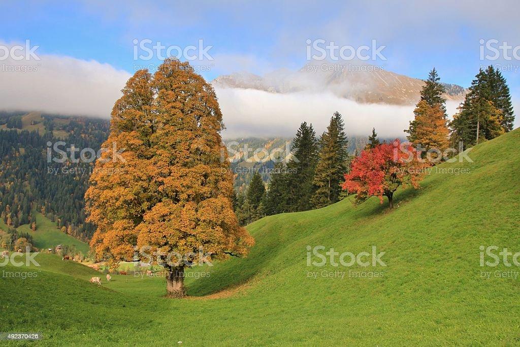 Autumn scene near Gstaad stock photo