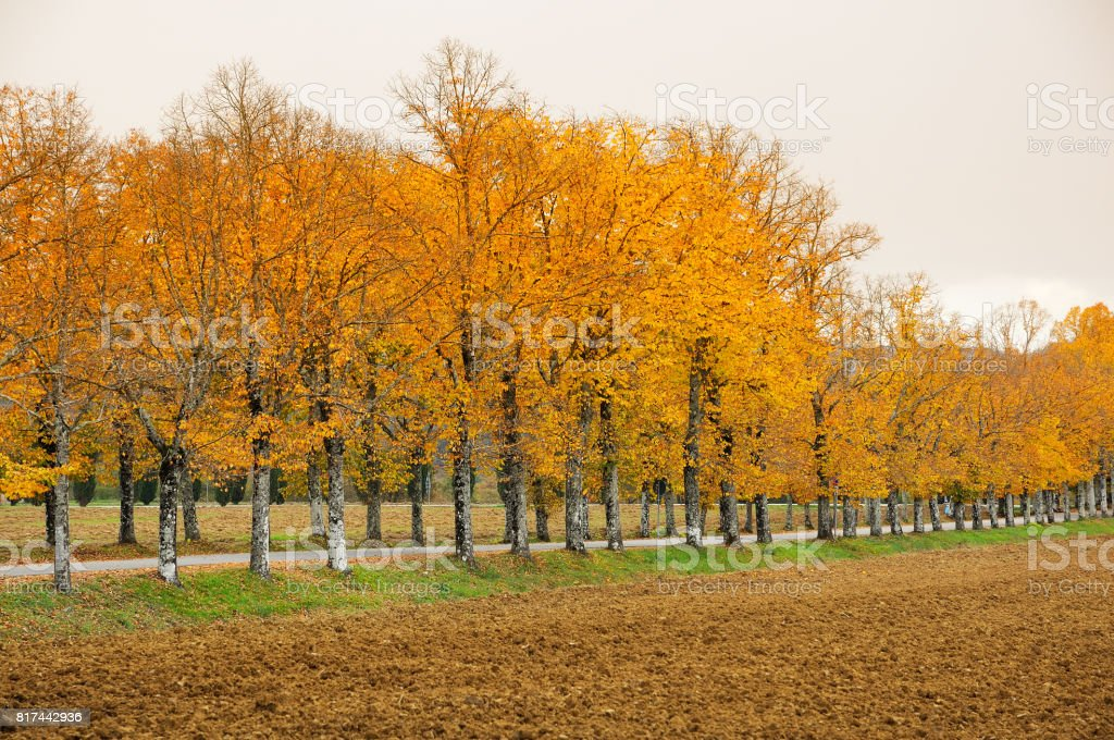 Autumn scene near San Galgano Abbey, Tuscany, Italy. stock photo