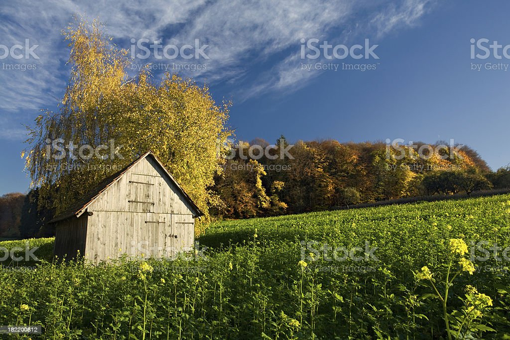 Autumn scene royalty-free stock photo
