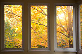 Beautiful fall view through screen in porch windows.  Sun shines through the golden leaves. More fall images: