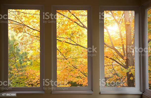Photo of Autumn scene through porch window screens.