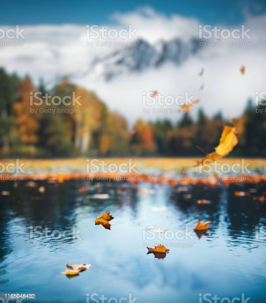 Photo of Autumn Scene With Falling Leaves
