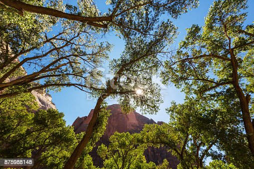 Autumn scenery in Zion National Park, along the Angel's Landing trail