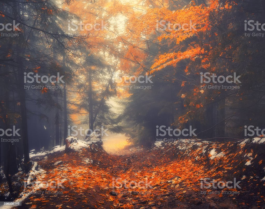 Autumn scenery of forest path on a foggy morning Lizenzfreies stock-foto