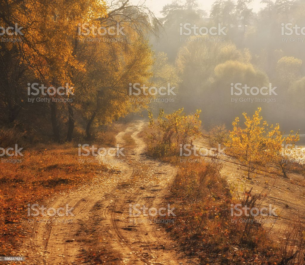 Autumn scenery of rural lane on a foggy morning royalty-free stock photo