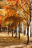 Autumn scenery, Autumn leaves