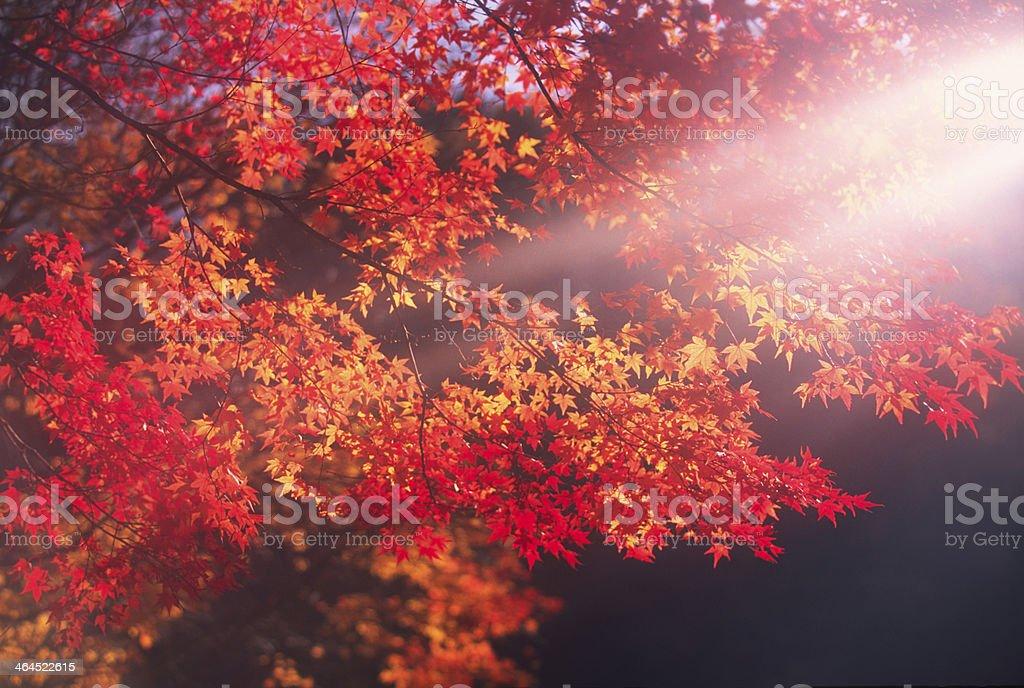 Autumn Scenery royalty-free stock photo
