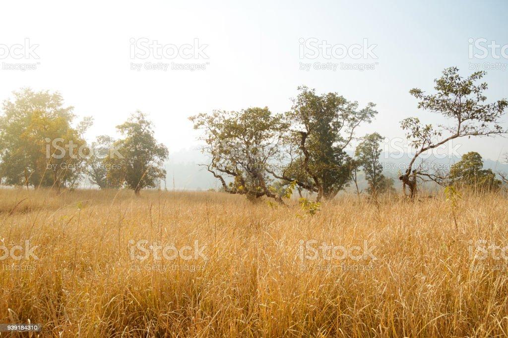 Autumn scenery with stubble-field. stock photo