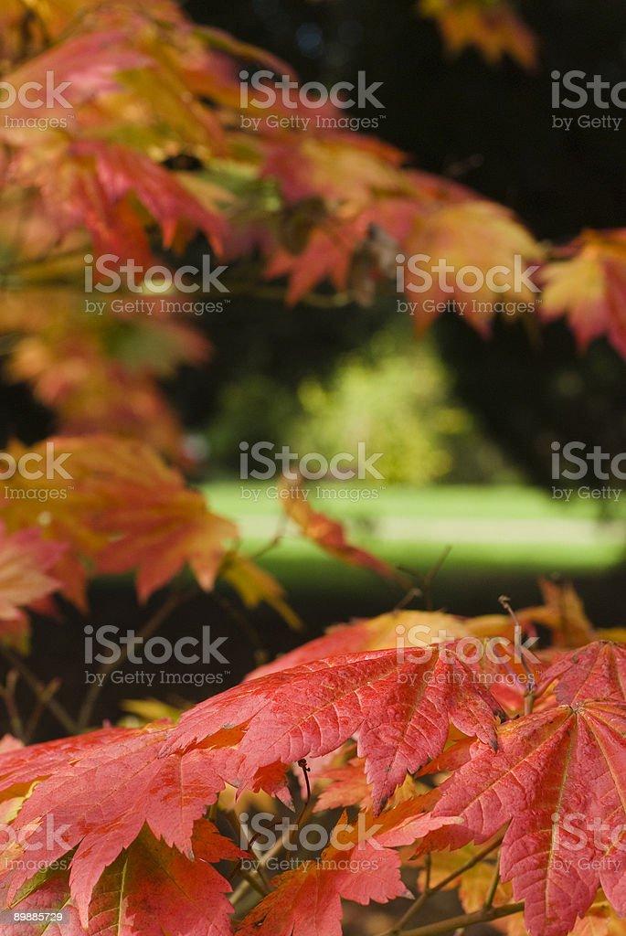 Escenas de otoño foto de stock libre de derechos