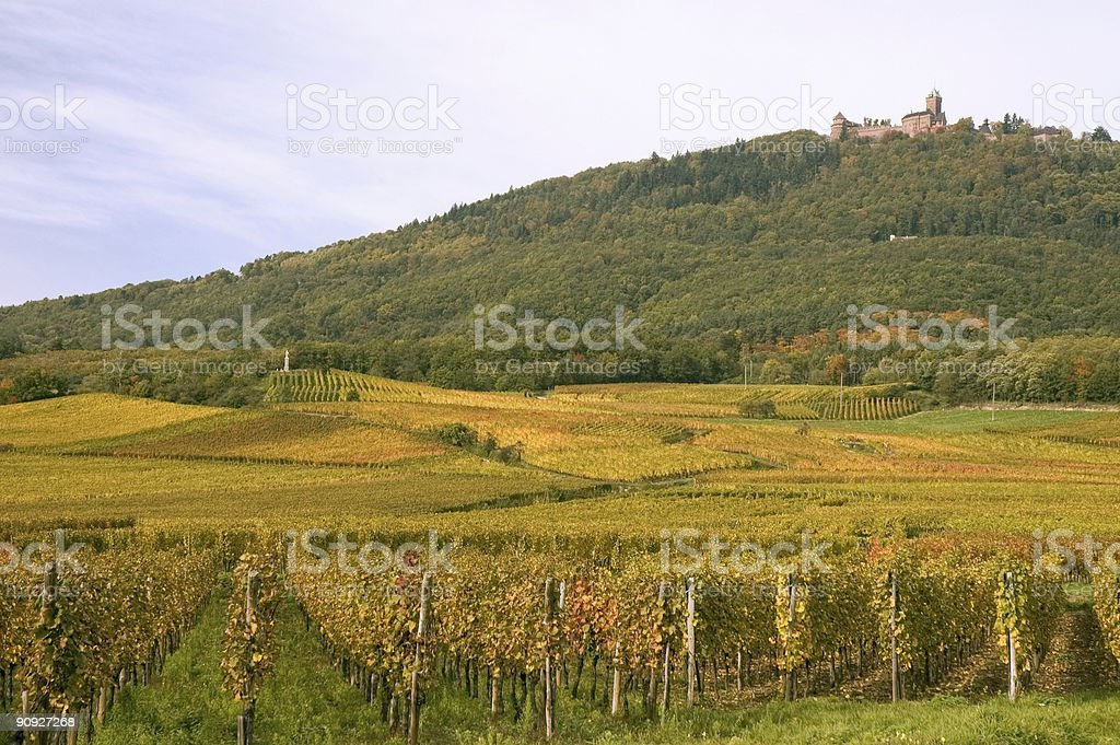 Autumn Scenic in Alsace stock photo