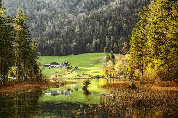 autumn scenic - lake reflections in bavaria germany - bayerischer wald bildbanksfoton och bilder