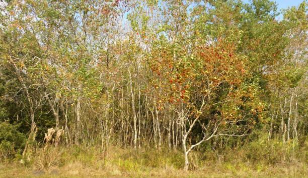 Autumn Scrubland stock photo