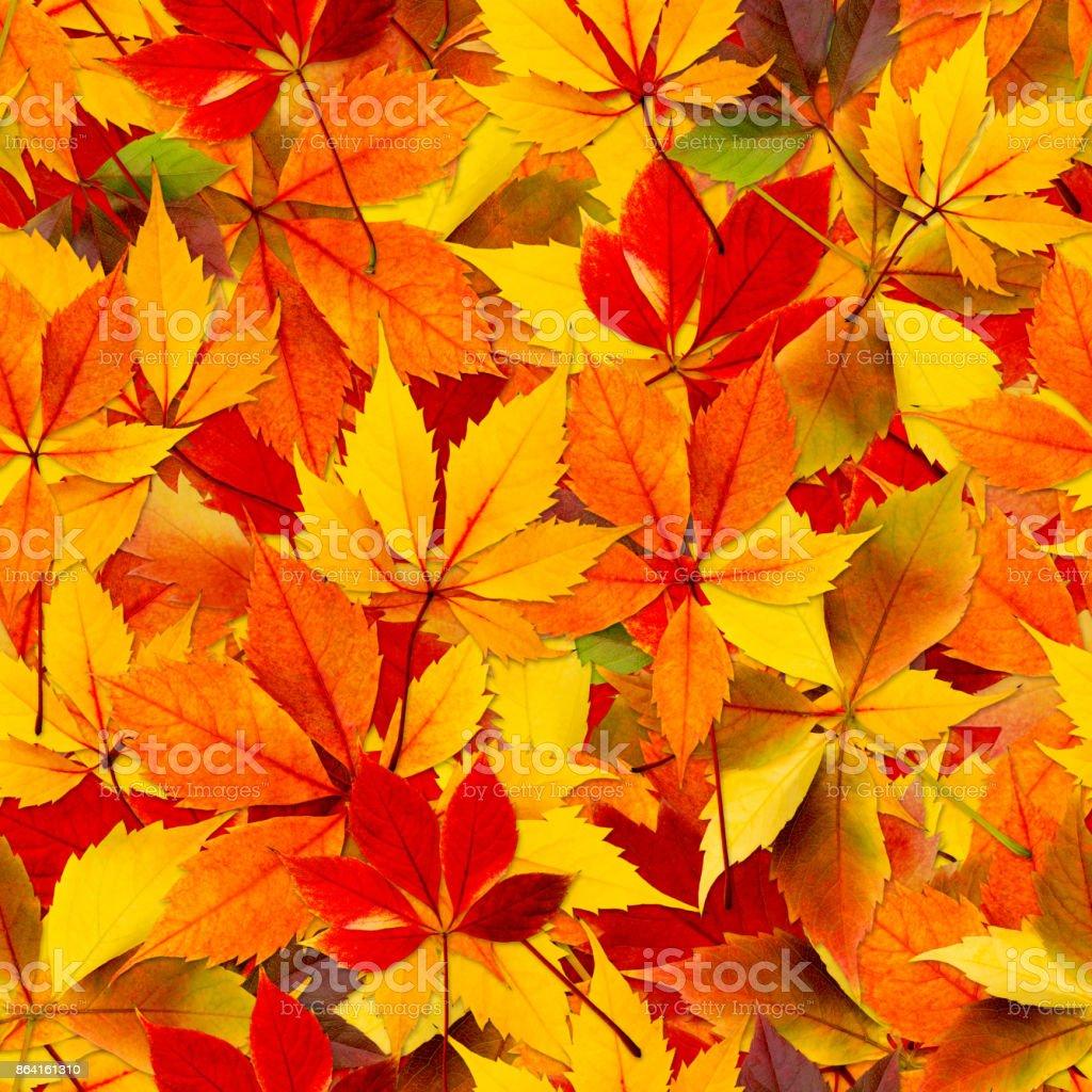 Autumn Seamless Leaves royalty-free stock photo
