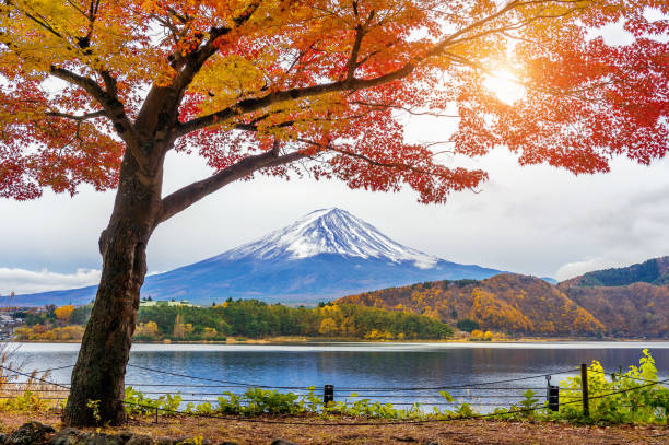 Autumn Season and Fuji mountains at Kawaguchiko lake, Japan. stock photo