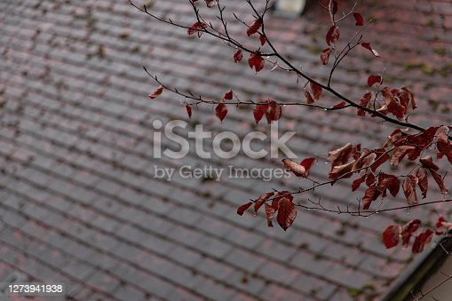 autumn season concept landmark background concept of October bare branch and shingle rooftop unfocused view
