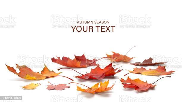 Photo of autumn season concept, maple leaf isolated on white background