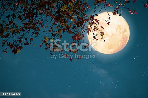 Beautiful autumn fantasy - maple tree in fall season and full moon with star. Retro style with vintage color tone. Halloween and Thanksgiving in night skies background concept.