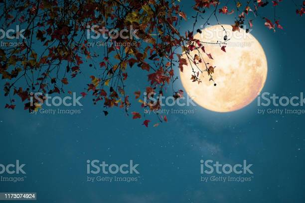 Photo of Autumn season in the night skies background concept.