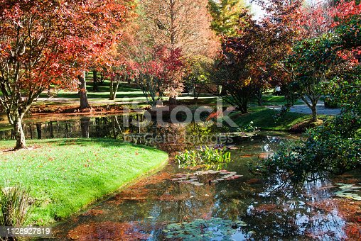 Beautiful autumn season landscape with maple trees and their leaves changing color. There is a stream with water lilies and reflections of the surrounding area in this Japanese garden.