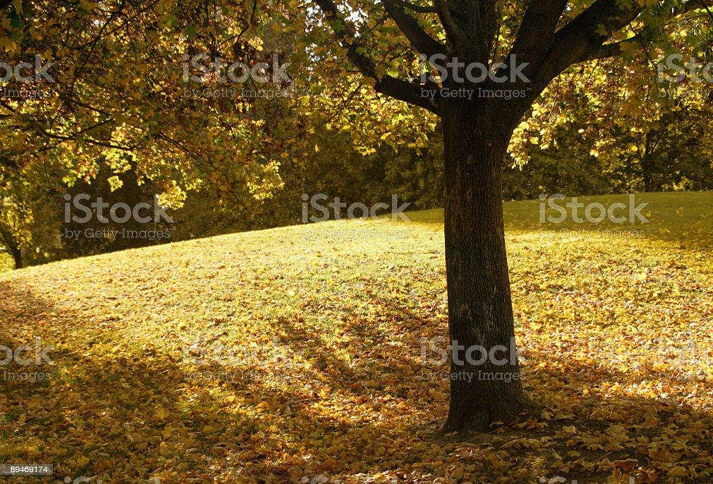 Autumn season royalty-free stock photo