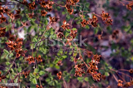 View of Brown Colored Dried Flowers in autumn.