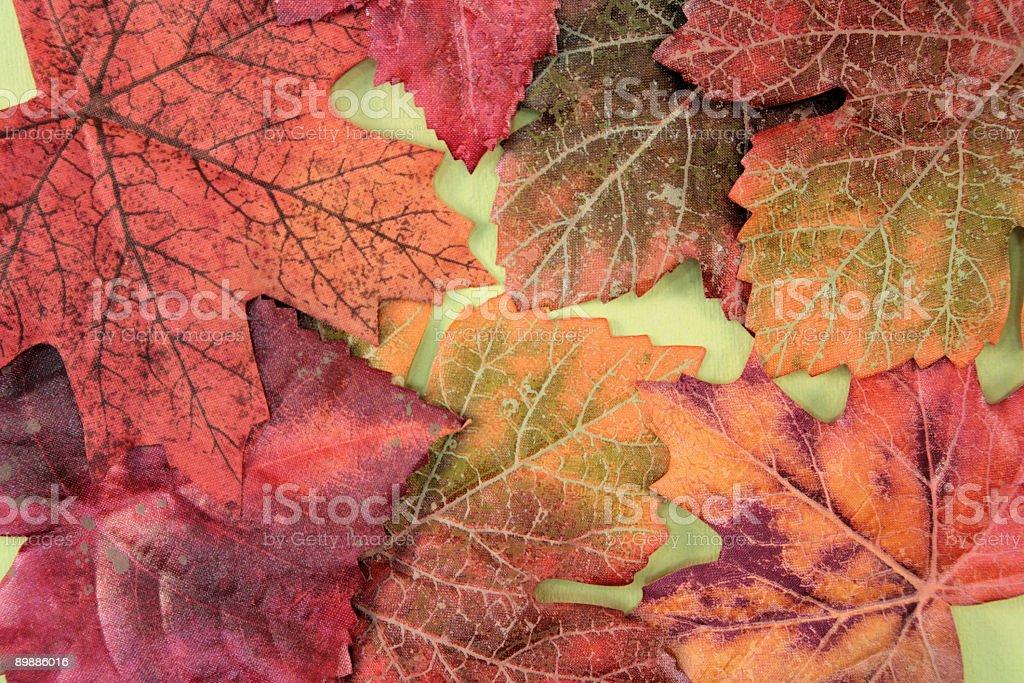 Autumn Series royalty free stockfoto