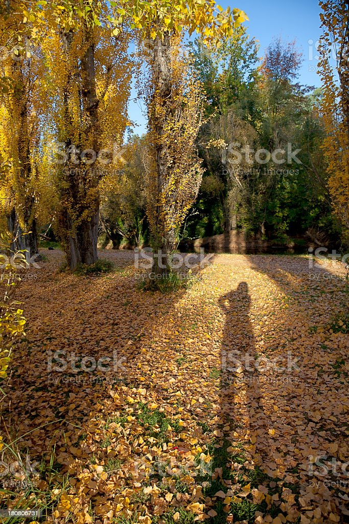 Autumn shadows royalty-free stock photo