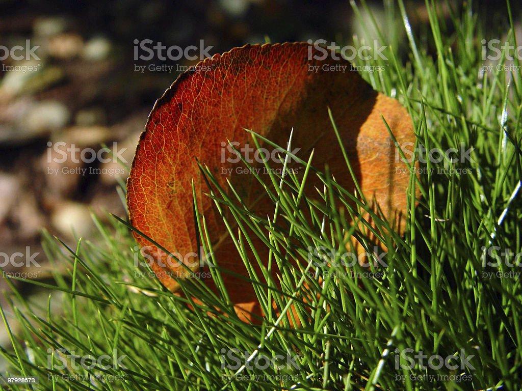 Autumn sheet royalty-free stock photo