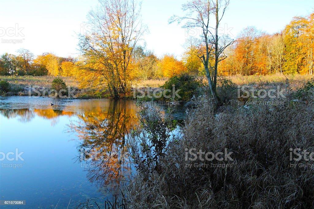 Autumn shows off the best side photo libre de droits