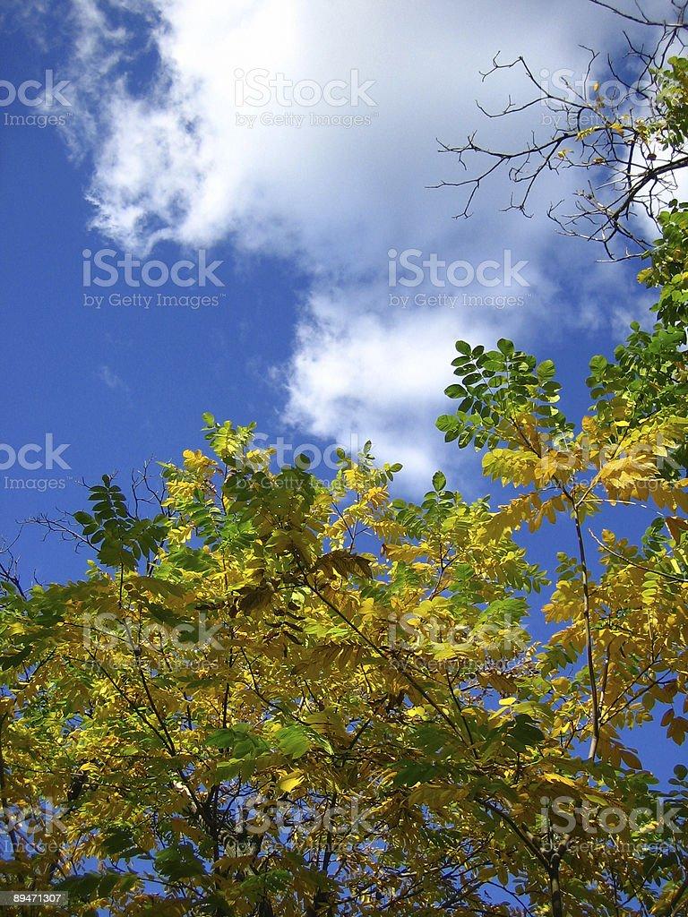 Autumn sky and foliage royalty-free stock photo