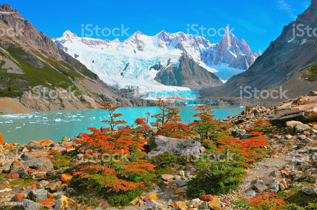 Autumn small trees by the lake near Cerro Torre mountain. stock photo