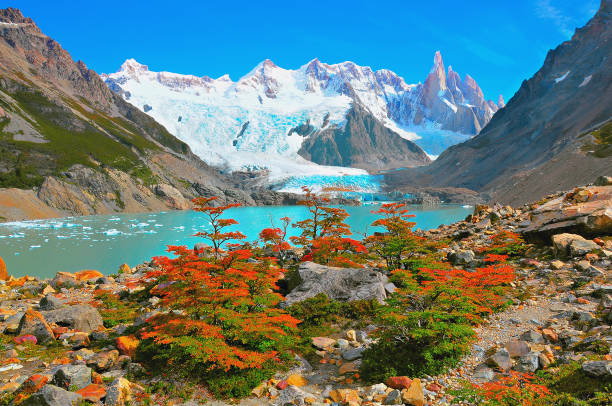 Autumn small trees by the lake near Cerro Torre mountain. Autumn small trees by the lake near Cerro Torre mountain. Los Glaciares National park. Argentina. Argentina stock pictures, royalty-free photos & images