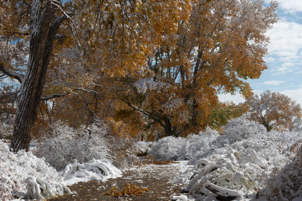 Autumn Snow stock photo