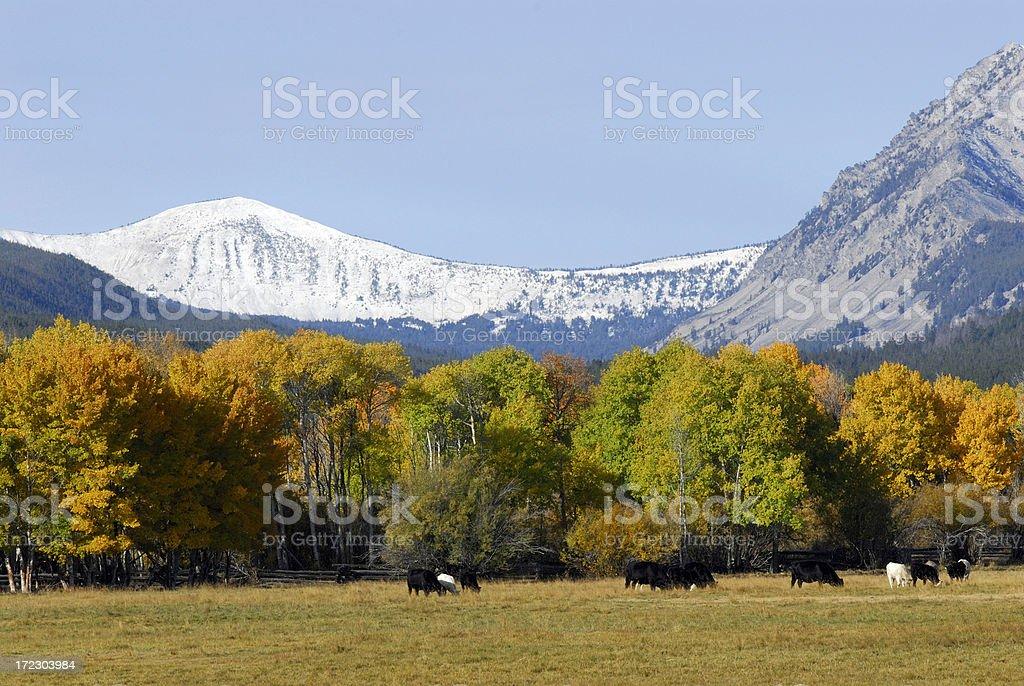Autumn Snow stock photo