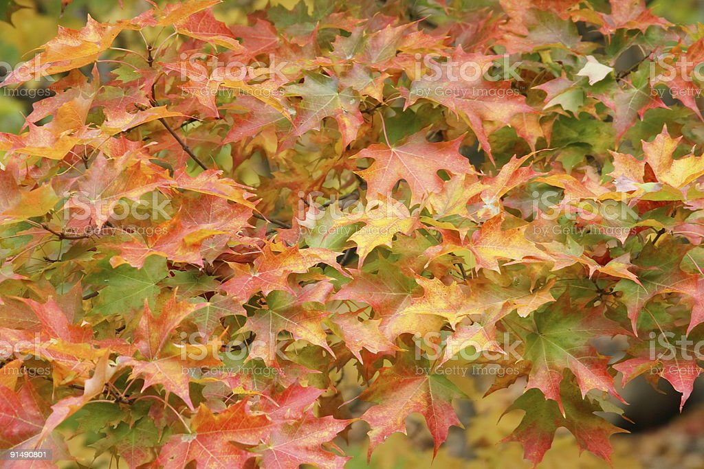 Autumn Spectacular royalty-free stock photo