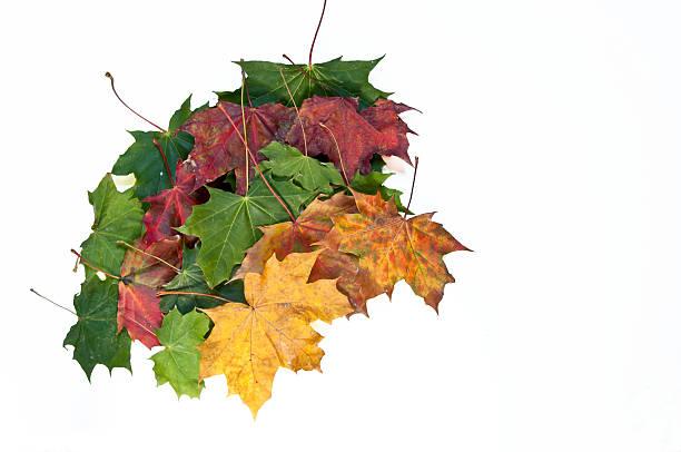 Autumn spectrum of colors stock photo