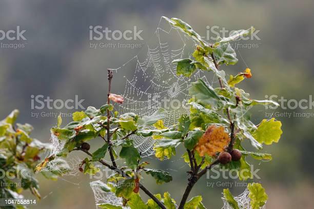 Photo of Autumn Spider Web - UK
