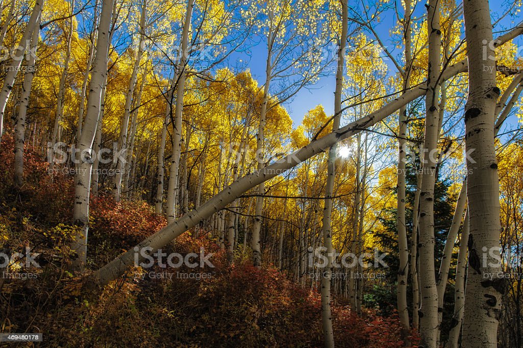 Autumn Splender stock photo