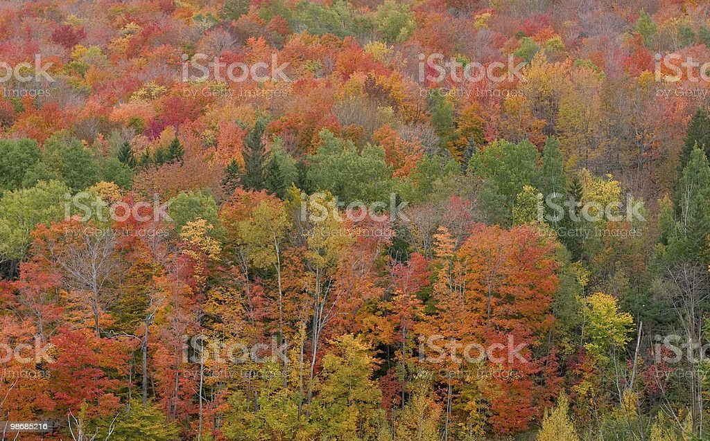 Autunno splendore IV foto stock royalty-free
