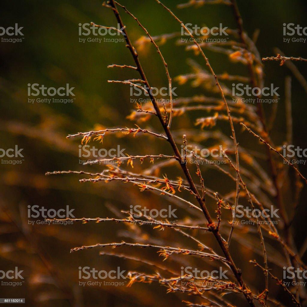 Autumn Stems stock photo