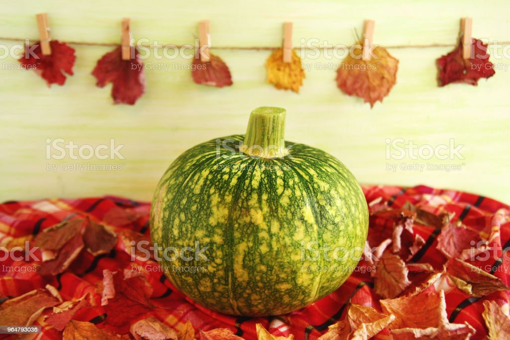 Autumn still life with green pumpkin with dry leaves on a checkered towel on a light green wooden background with leaves on a pins and a rope. royalty-free stock photo