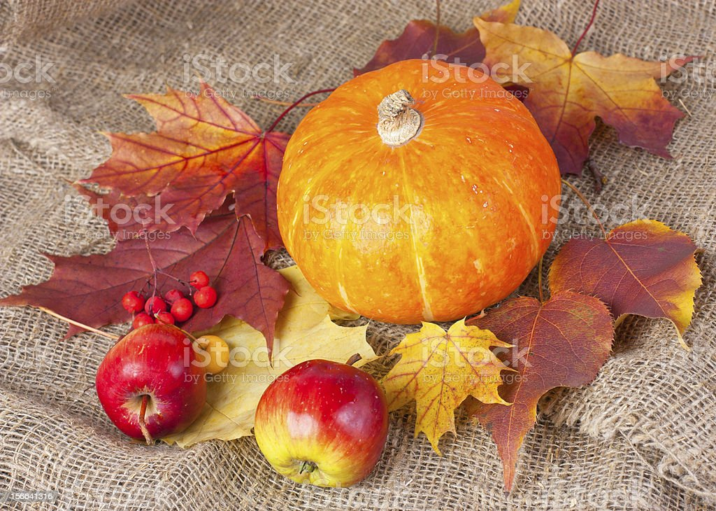 autumn still life with pumpkin royalty-free stock photo