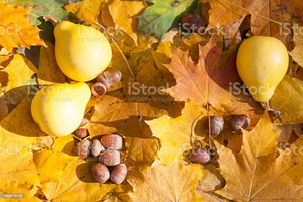 Autumn still life with pumpkins and acorns royalty-free stock photo