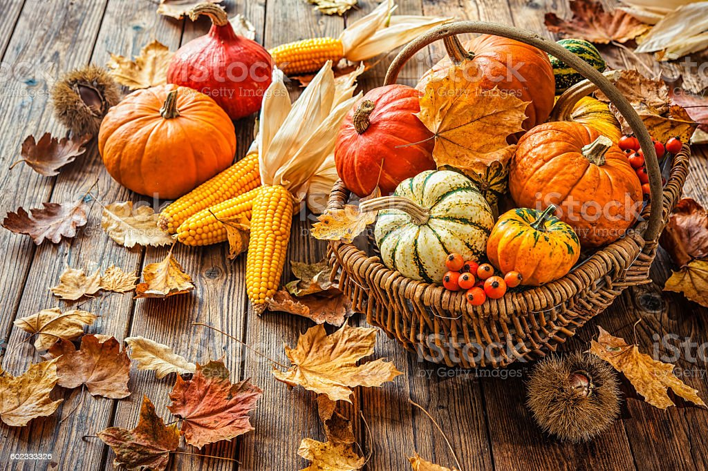 Autumn still life with pumpkins, corncobs and leaves stock photo