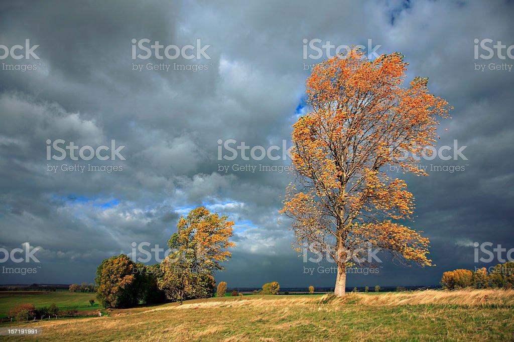 Autumn Storm royalty-free stock photo